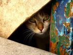 Shy Cat by nordfold