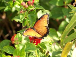 Butterfly Garden 3 by Fully-Stocked