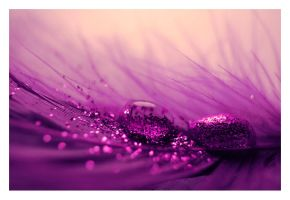 Purple love by Replicante