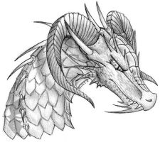 016 . Dragon Head Sketch by oakendragon