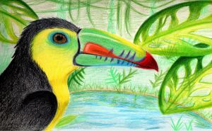 Toucan by konluver