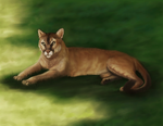 Florida Panther Painting by Bezumiye