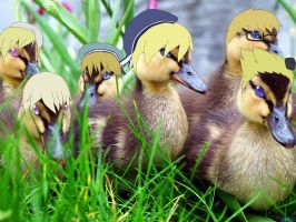 Norducks by do-he-got-the-booty