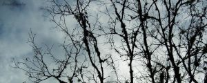 Tree branches by Ranae490