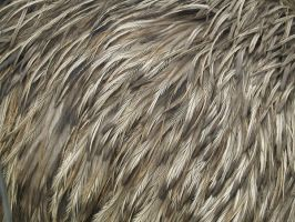 Emu feather texture by Irie-Stock