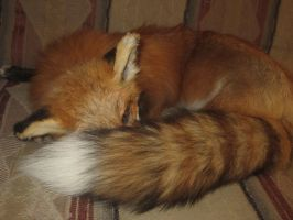 Sleepy fox2 by Mitzi-Mutt