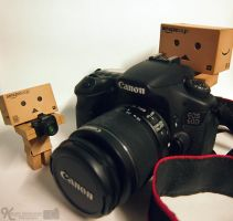 Danbo Photograph by Sketchylious