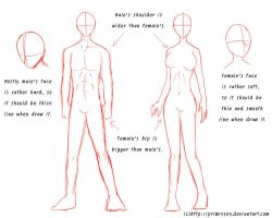 Tutorial - Male's and Female's Anatomy by daFlique