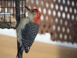 Pretty Red Head by Ee-Vet