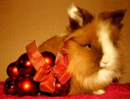 25 Buns of Christmas :- 2. Capella by MessiMutt