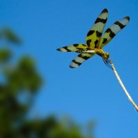 Dragonfly by ChrisDalton