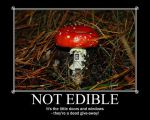 Mushroom - Not Edible by InquisitorMinmi