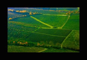 wineyards by uros2006