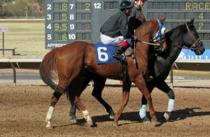 Racehorse Stock 39 by Rejects-Stock