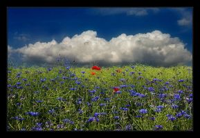 Corn Flowers and poppy by Hartmut-Lerch