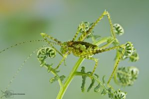 Camouflaged katydid by ColinHuttonPhoto