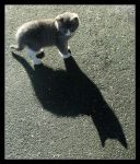 Little Cat Big Shadow by kanes