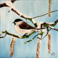 Blackcap by WendyMitchell