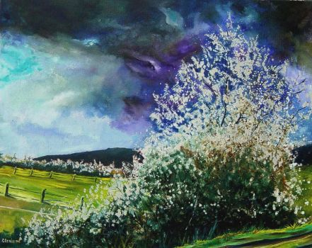 hawthorn in blossom by pledent