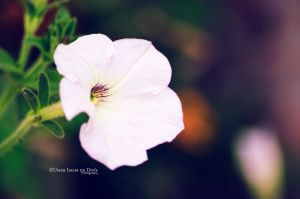 Day 228: A Flower by umerr2000