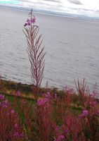 pink near the sea by IamNasher