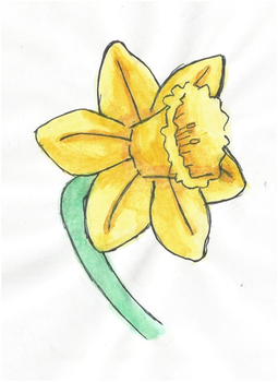 Daffodil by twilightlinkjh