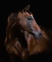 Thoroughbred by feverpaint