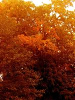 Autumn Trees by altheriol