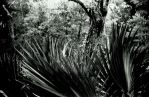 Palmetto waves by lamorth-the-seeker