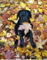 Eating the autumn leaves by ClarasNisse