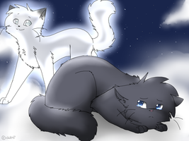 Bluestar... by Snow-Berries
