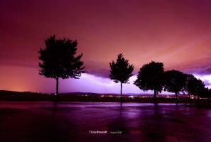 from tree to tree by hermik