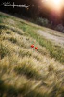 A Heart Of Poppies by ElementaryDearWatson