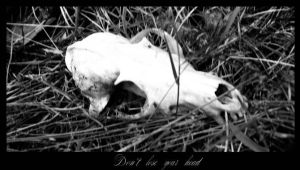Don't lose your head by Kheila