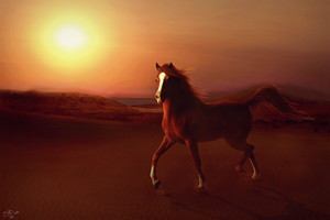 Arabian Sun by BlueBird-Graphics