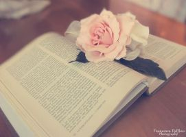 Book and rose by FrancescaDelfino