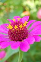 Pink Yellow Flower by jrbamberg