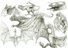 Dragon Sketches 1 by eoghankerrigan
