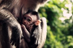 Baby Macaque Monkey by OCMay