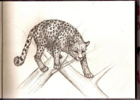 Art Exchange: Leopard by bleistiftkind
