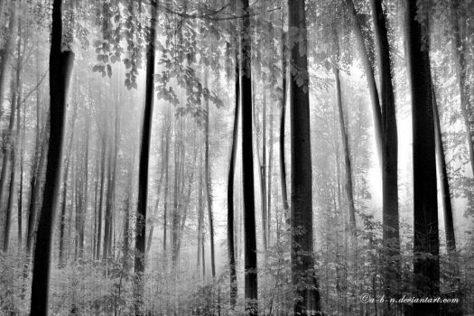 forest trees by a-b-n
