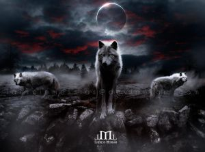 Night Wolves by LaercioMessias