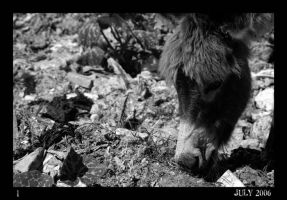 Others - Donkey by Cleonor