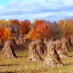 Shades of Autumn 24 by MadGardens