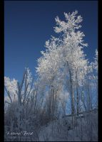 Natural Frost by Sagittor