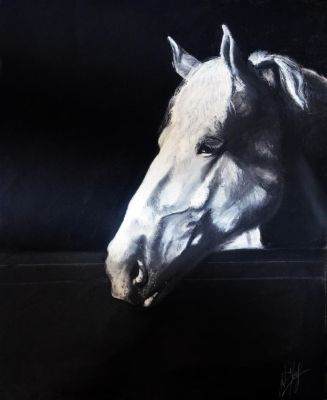 Horse Done in Charcoal (video in description) by Lavindyer