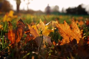Leaves on the grass 2 by spoii