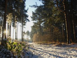 Early Winter Wheldrake Woods by davepphotographer