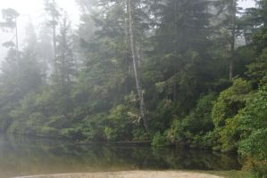 misty lake shore by Erica-Danes