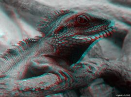 Lizard Anaglyph 3D by Agaver